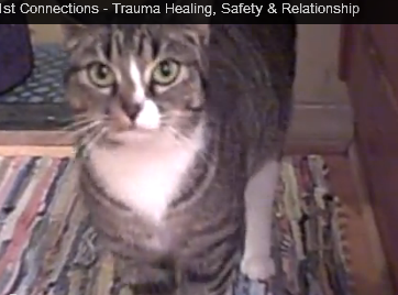 Trauma Healing for Feral Cat
