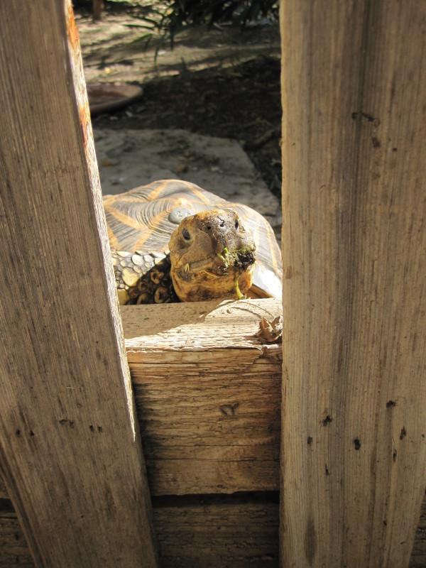 2015, McNell, Ojai, Turtles & Lizards 044