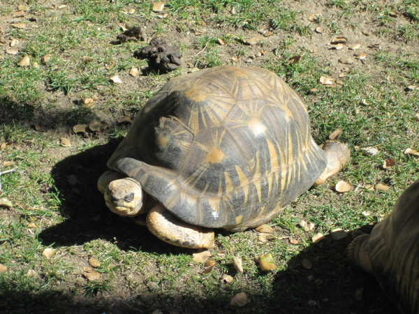 2015, McNell, Ojai, Turtles & Lizards 078